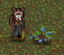 Legacy-Blueberries plant.png