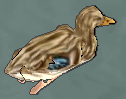 Duckoo.png