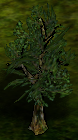 Sallowwillow.png