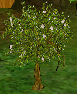 Mulberry Tree.png