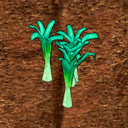 Leek Crop Stage 5.png