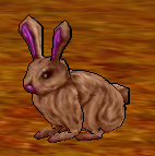 Rabbit Doeingame.png