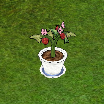 Strawberry in Garden Pot.png