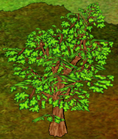 Sycamore Tree.png