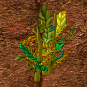 Pipeweed Crop.png