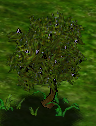 Mulberrytree.png