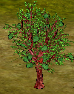 Almond Tree.png