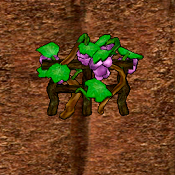 Grapes Crop.png