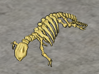 Otter-skeleton.png