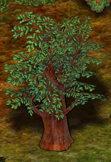 Terebinth Tree.png