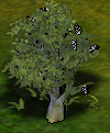 Birdcherry.png