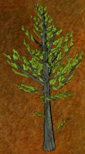 Black Pine Tree.png