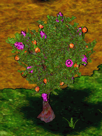 Crabapple Tree.png