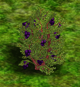 Blackberry Bush.png