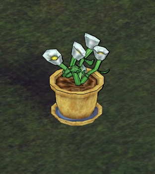 Thyme in Garden Pot.png
