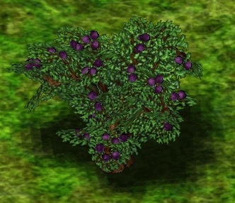 Blackcurrant Bush.png
