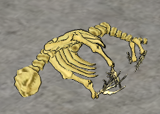 Grey Seal-skeleton.png