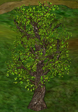 Poplar Tree.png