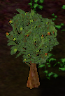 Walnuttree.png